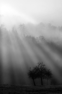 morning_fog_by_donk00085